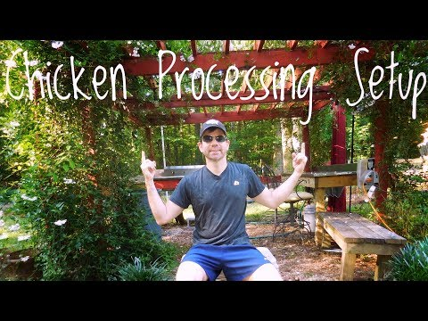Our Backyard Poultry Processing Setup - Chicken Processing Area On Our Homestead