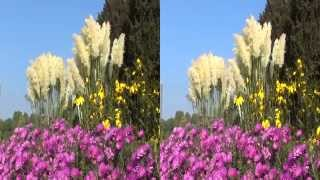 3D video - Bonn: Late Summer Dream - YT3D