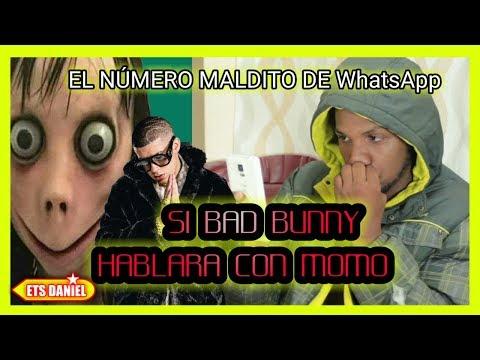 MOMO - Si Bad Bunny Hablara con MOMO | El Numero Maldito de WhatsApp
