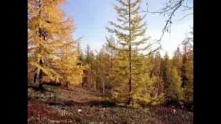 Полуостров Ямал(Всем кто влюблен в Север., 2014-02-05T06:34:20.000Z)