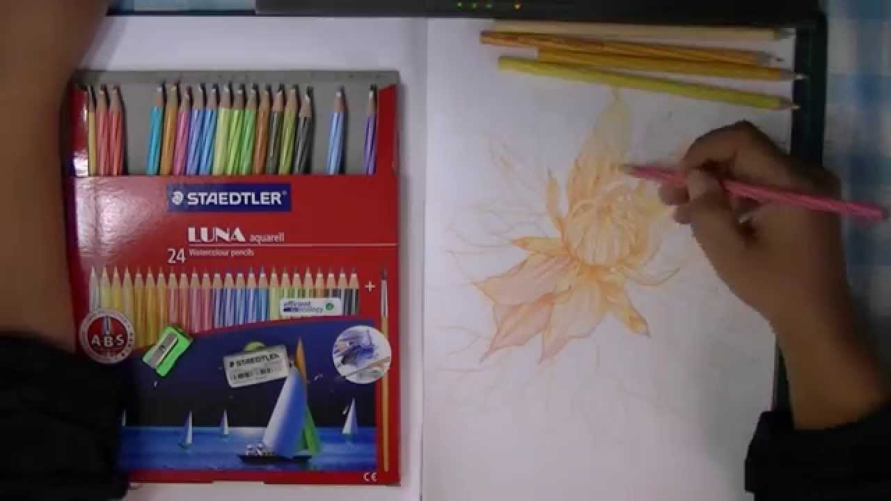 Staedtler Watercolor Pencils 24 Karat Luna Aquarell Watercolour 137 C36 Drawing Dahlia Flower Using Wat Youtube