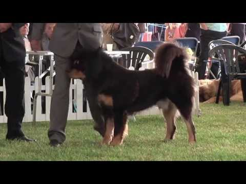 bournemouth-championship-dog-show-2013-working-group