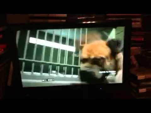 Garfield The Movie Escape From Animal Control Scene Youtube