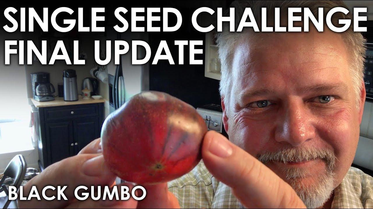 Single Seed Challenge FINAL Update || Black Gumbo