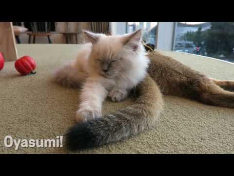 Best Cat Cafe in Tokyo   Crunchyroll Japan