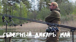 Ловля карпа на дикаре в мае северо запад России 2020