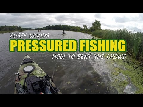 Busse Woods Pressured Weekend Fishing:  How to Beat The Crowd!