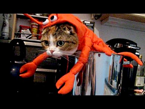 Cats and Dogs Wearing Halloween Costumes Compilation NEW