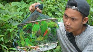 jebakan jaring untuk semua jenis burung || hanya modal jaring