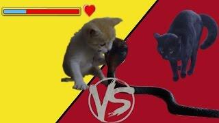 Котенок Рыжик против кошки Китти и кобры Нагайны.  Битва за территорию