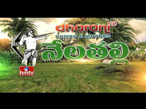 Nela Talli - Episode 112 | Cotton Market | AP Rabi Insurance | Coconut Board | HMTV
