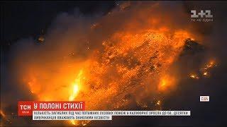 У Каліфорнії зросла кількість загиблих внаслідок лісових пожеж