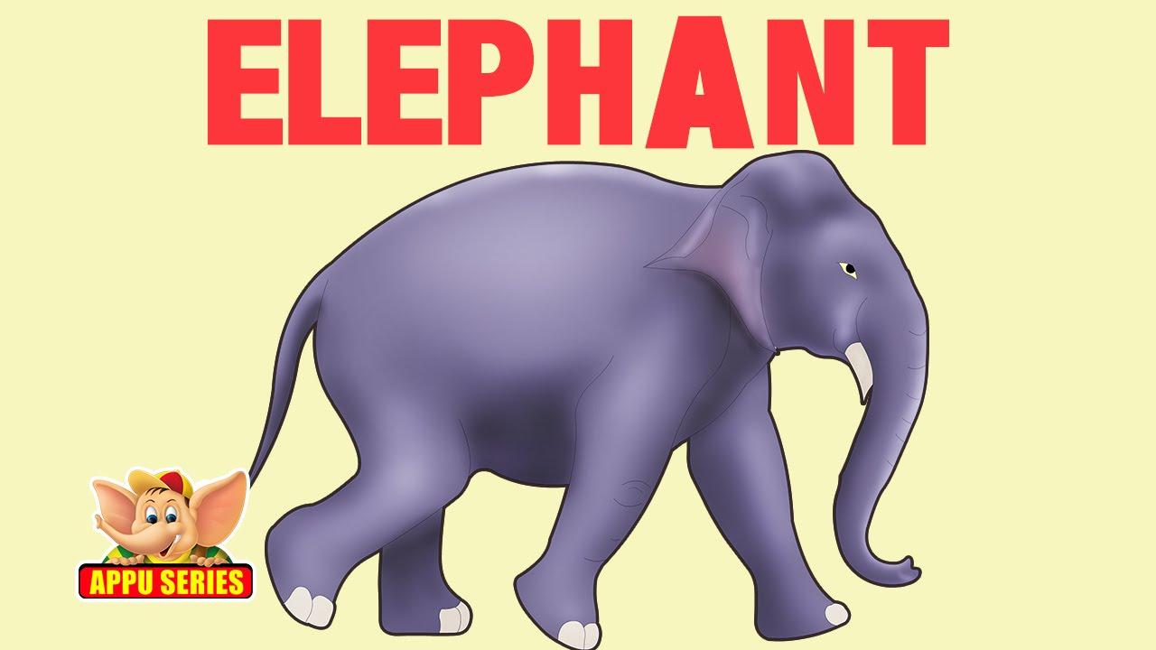 animal facts elephant youtube