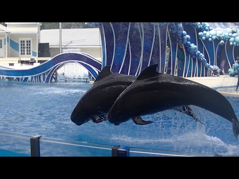 Blue Horizons Featuring Pilot Whales - Aug 17 2016 - SeaWorld Orlando