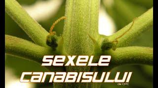 veruci genitale criofarmice
