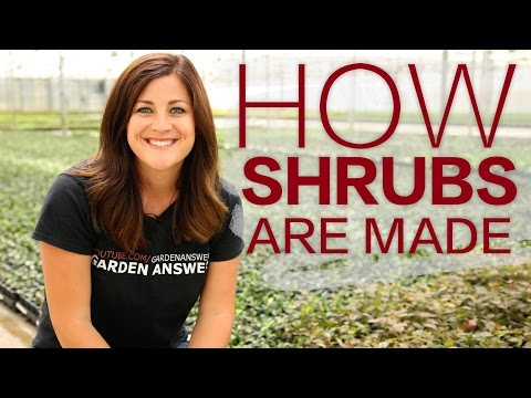 How it's Made: Shrubs // Garden Answer