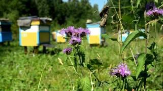 Пасека(Раис Хадиуллин нас любезно пригласил на свою пасеку, чтобы рассказать весь процесс сбора мёда., 2011-07-28T08:29:58.000Z)