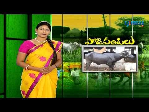 Farming techniques during kharif season - Paadi Pantalu