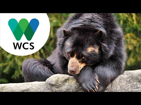 Manifiesto Wildlife Conservation Colombia