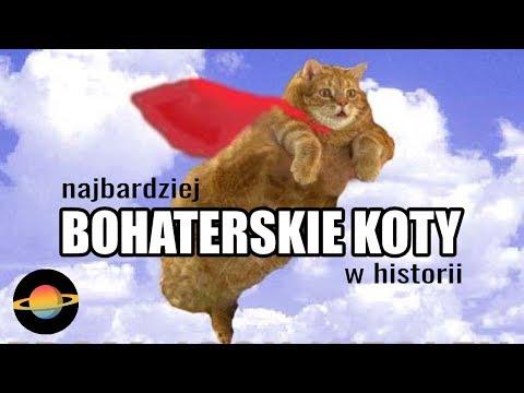 10 najbardziej bohaterskich kotów w historii