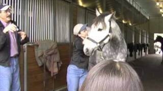 Horse Massage: Improving Lateral Flexion in the Horse using the Masterson Method®