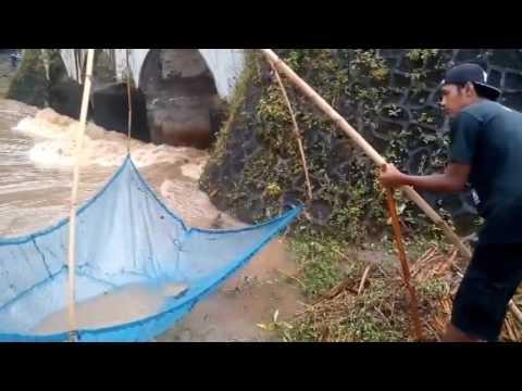 Gokil jaring ikan di Sungai Banjir Gunungkidul