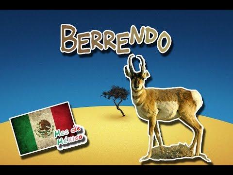 Berrendo |El Corredor De Los Desiertos| (Animales Del Mundo) |Mes De México|