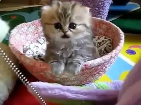 смешные кошки и котята - video-