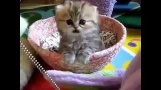 Прикольные кошки веселые кошечки и милые котята Забавно смотреть!!1