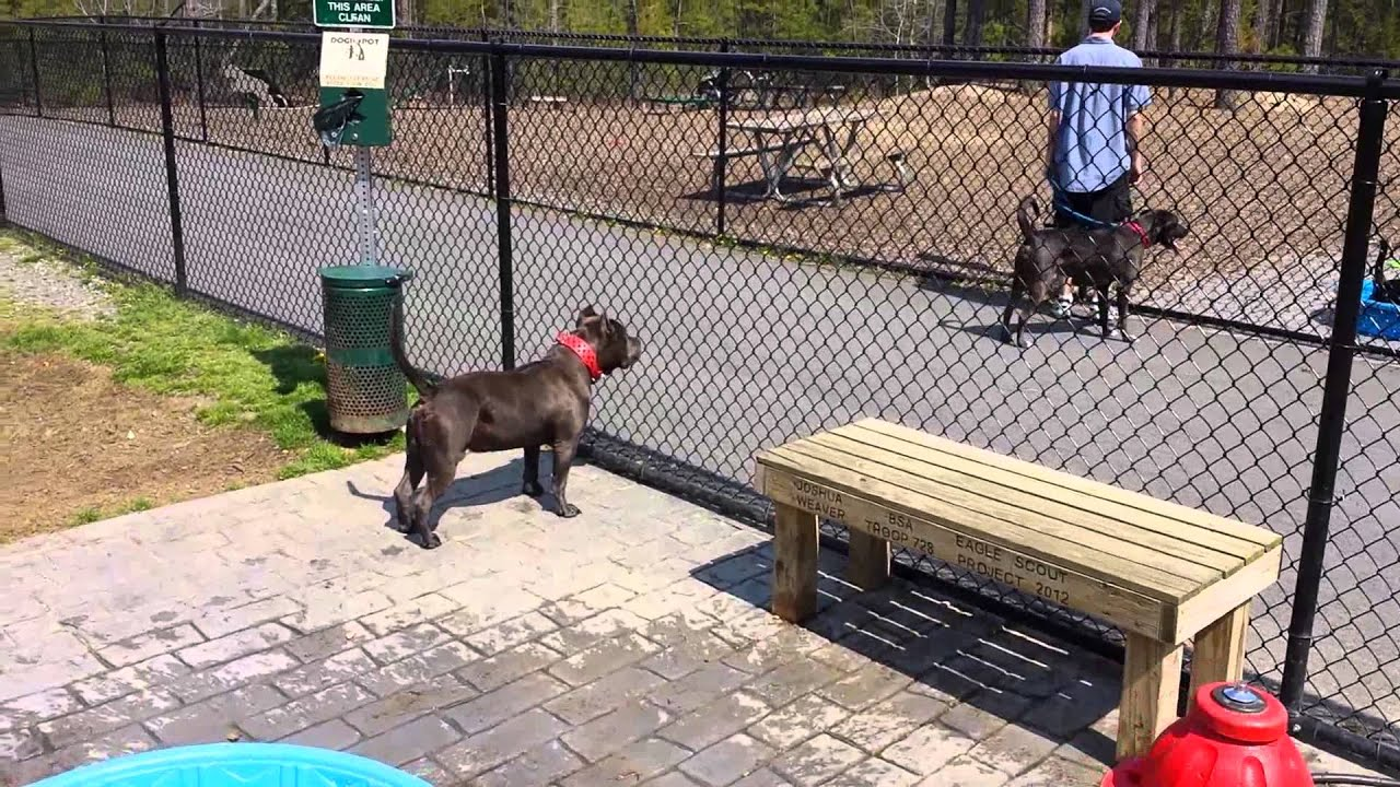 how to get park bully