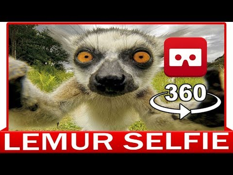 360° VR VIDEO - LEMUR - DISCOVERY ANIMAL & NATURE - VIRTUAL REALITY 3D