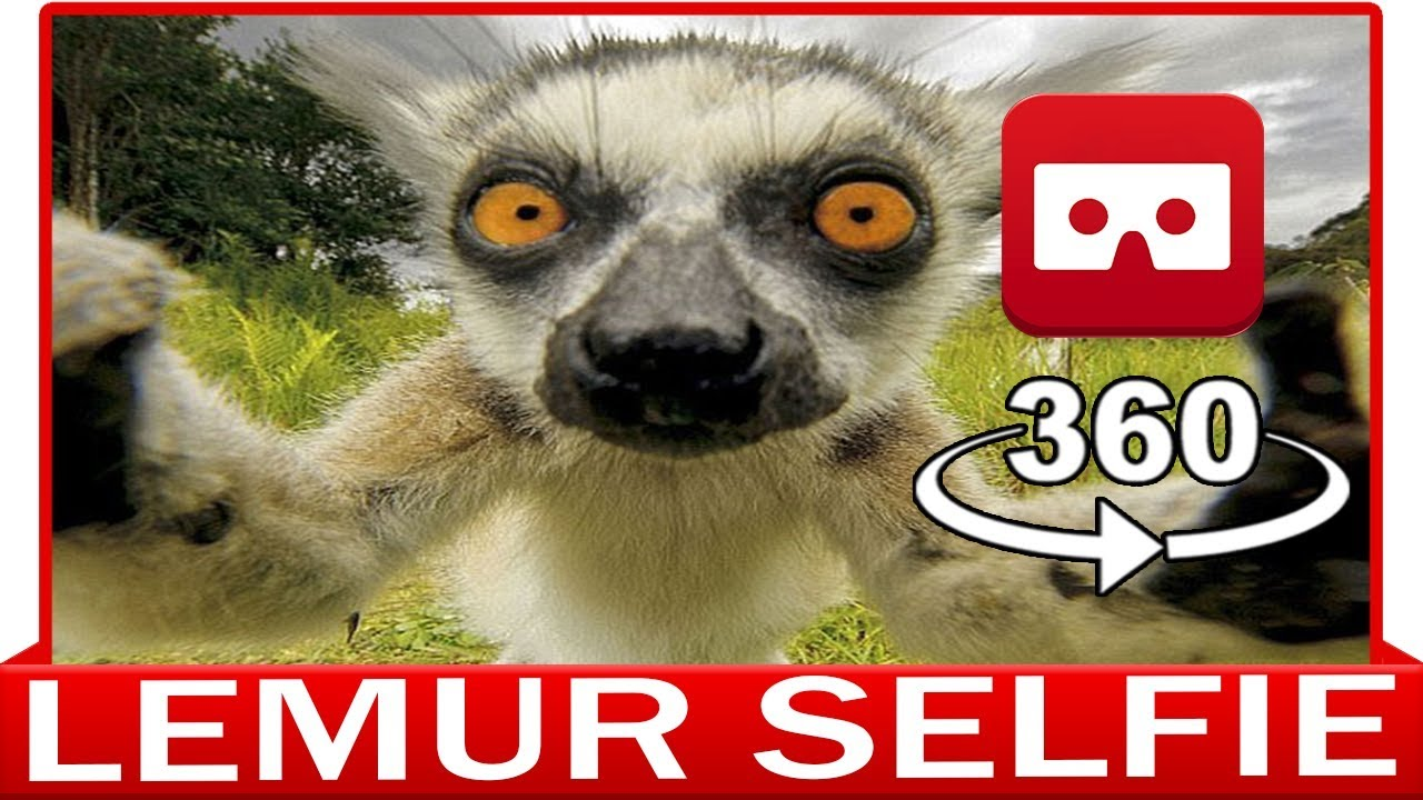 LEMUR - DISCOVERY ANIMAL & NATURE - VIRTUAL REALITY 3D