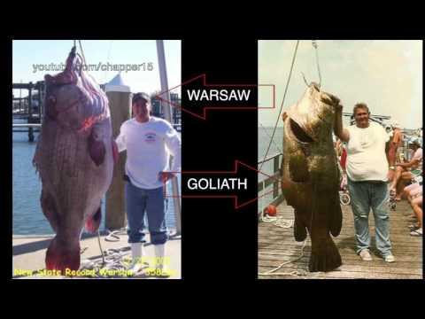 347-pound Warsaw Grouper weighed in!