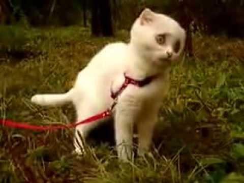 Самая смешная подборка видео про котов
