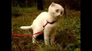 Самая смешная кошка в мире    crazy cat