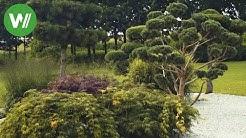 Der asiatische Garten - Bonsai, Bambus und Wasser - Planung und Umsetzung