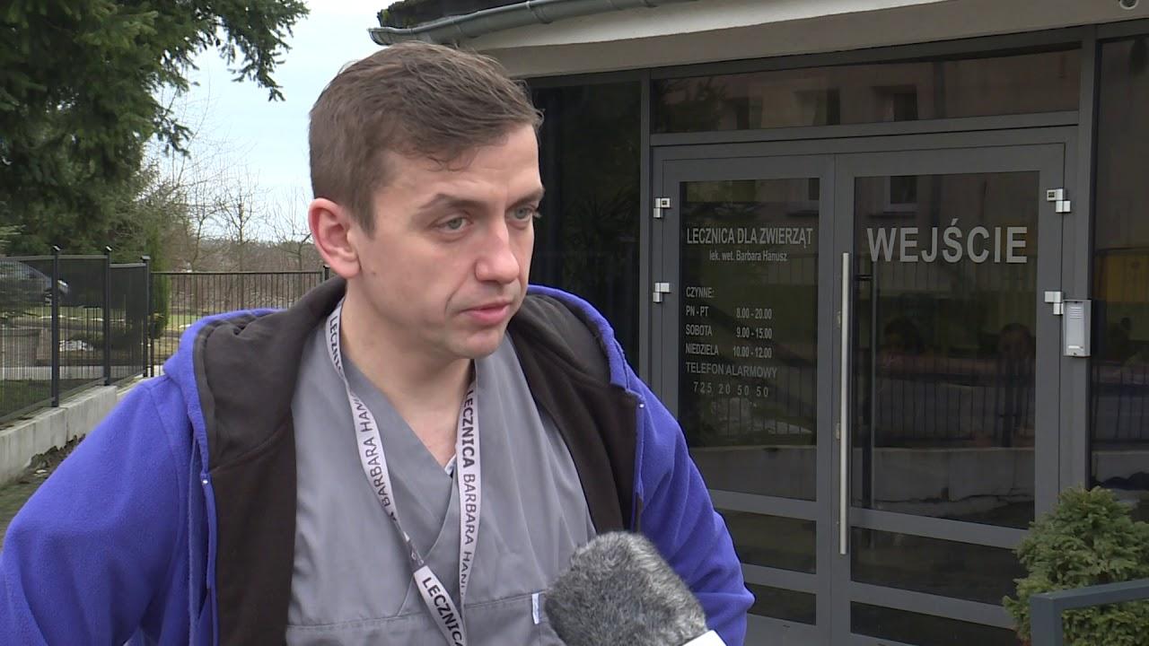 Skatowany piesek z Przytoku powoli wraca do zdrowia