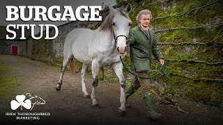 ITM Irish Stallion Showcase 2021 - Burgage Stud
