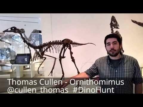 Ornithomimus - #DinoHunt