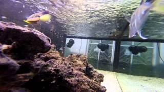 Aquario Marinho, Desova e Nascimento de Tubarão bambu