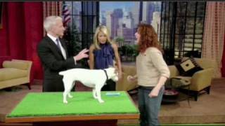 Dog Blog Review Of The Dog That Counts On Regis & Kelly