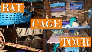 Rat Cage Tour! || Our first ever rat cage tour!