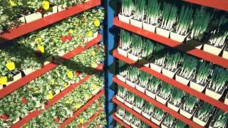 Способ  выращивания растений в защищенном объеме