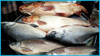 Carp Fish Cut Into Small Chunk in Fish Market By Fishmonger | Fish Cutting Fillet And Slicing Videos