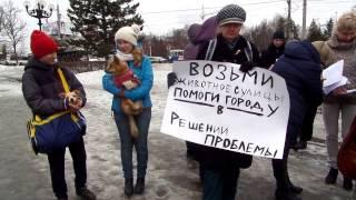 25.03.2017 в Барнауле прошёл митинг за гуманный закон в защиту животных.