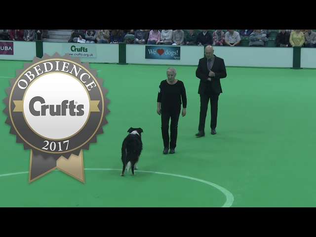 Obedience Championship - Dogs - Part 5 | Crufts 2017