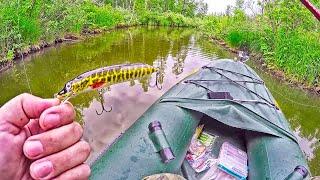 ЩУКА НА ЩУКУ! Рыбалка на живописной лесной речке! Ловля щуки на воблеры.