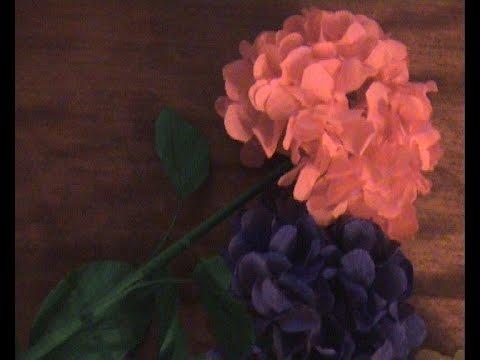 Название этого рода (hydrangea) произошло от греческих слов hydor и aggeion — сосуд. Означает это, что эти цветы очень любят влагу. Гортензии имеют множество видов и отличаются особой уникальностью. Даже одно соцветие может цвести разными цветами и формами — насколько удивительно и.