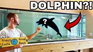 Download PET BABY DOLPHINS IN FRESHWATER HOME AQUARIUM!! Mp3 and Videos