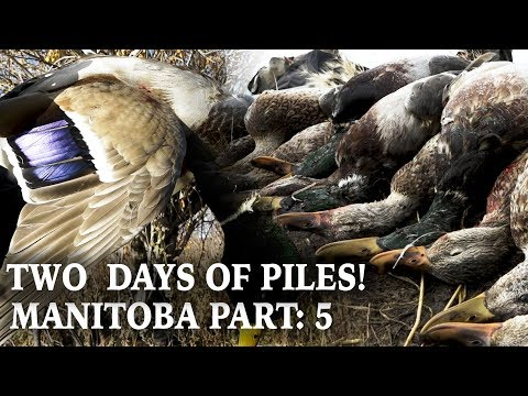 Final Days In Manitoba | Hunting Water For Ducks